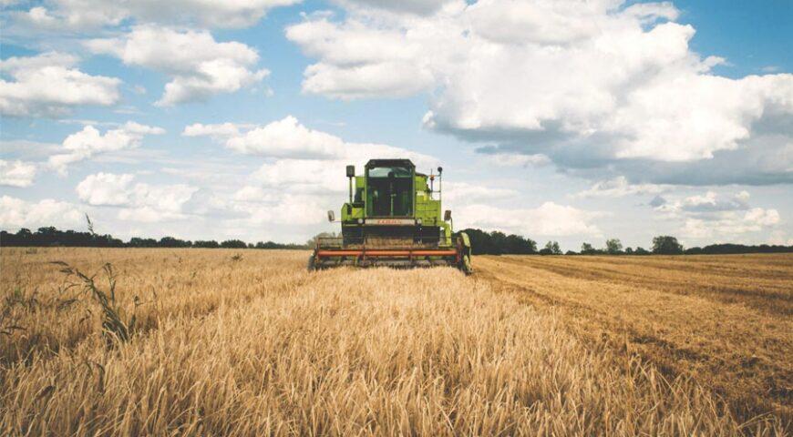 Marketing locale per aziende agricole: i nostri consigli